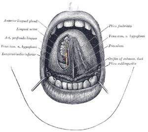 Hogyan kezelhető és megelőzhető a nyelvi vércukorszint