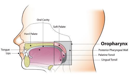 oropharynx rák és hpv
