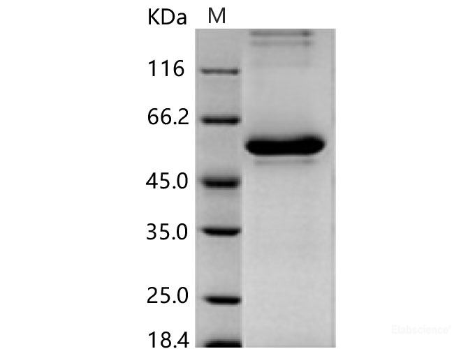 papilloma vírus hpv 45