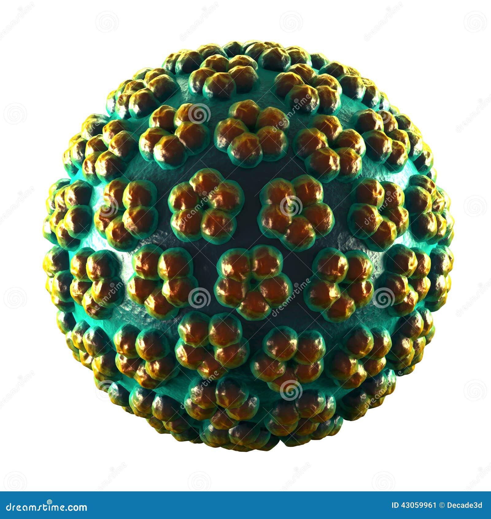 papilloma vírus)