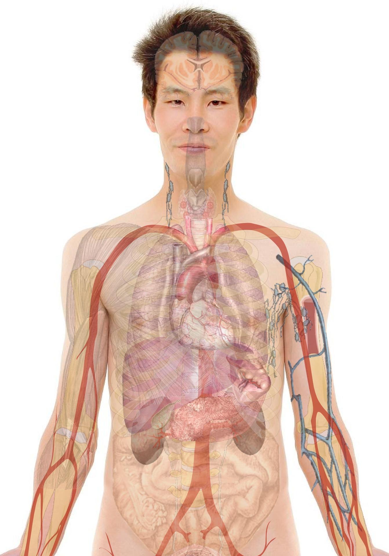 paraziták az emberi testben, jelek és kezelés