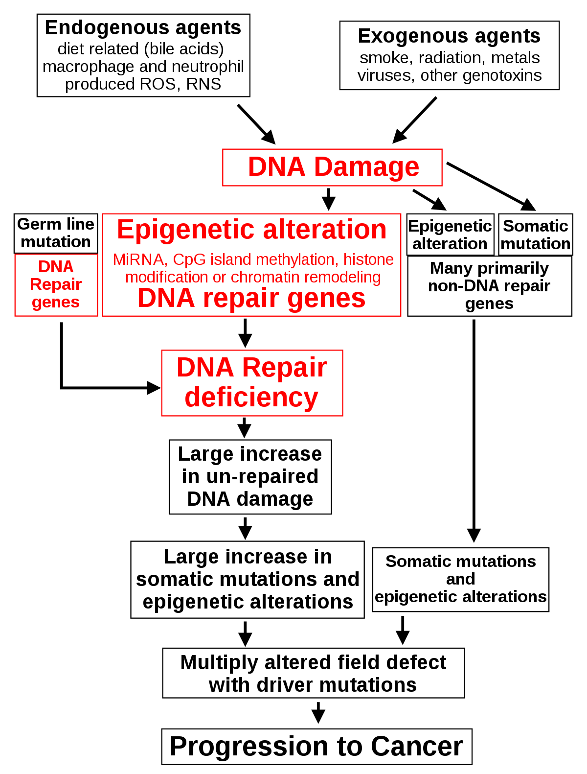 giardia macska panacur