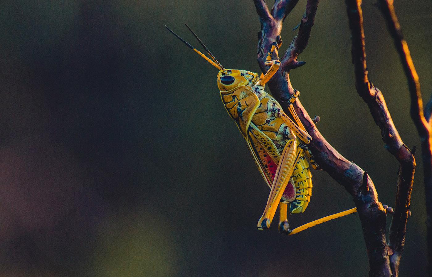 rovarészlelő ige