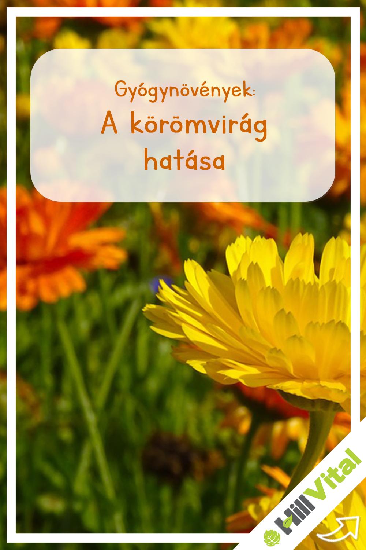 Körömvirág növényi előnyök - Milyen hatással vannak a tápanyagok egészségre?