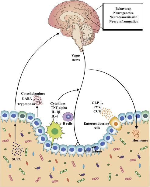 Hogyan gyógyítható meg a bél dysbiosis