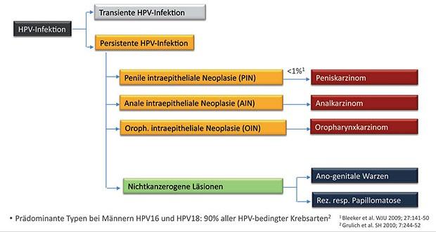 hpv impfung zeitpunkt)