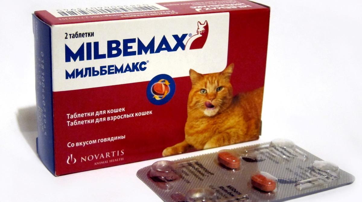 tabletták férgekhez macskákban)