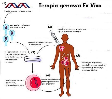 emberi papillomavírus genomika múltja és jövője)