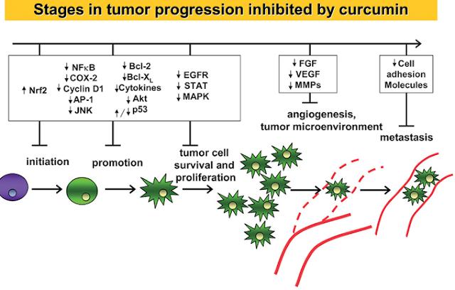 Az mtor (mammalian target of rapamycin) aktivitás jelentősége humán lymphomákban