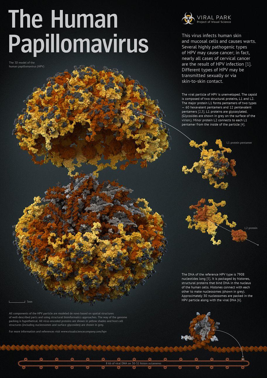 súlyos papillomavírus vagy sem