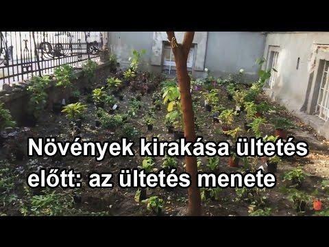 gnc méregtelenítő májkiegészítők)